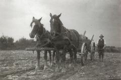 Pferdewagen_Oktober_1941
